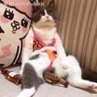 来啊 比基尼👙日光浴☀ 啤酒🍺三伏天,燥起来💨#宠物##给宠物穿泳衣##宠物酷炫技能#