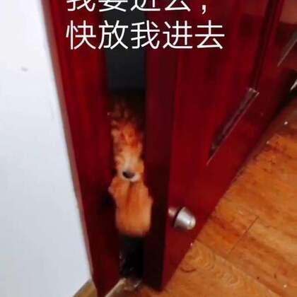 #cooky成长日记##宠物#想要进门的汪,其实cooky是一只杏色的狗但是因为加了滤镜,就成了这种颜色,不过也挺可爱的😋