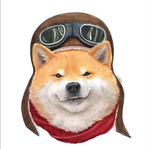 红遍网络的表情柴犬,二次v网络,被萌到了没有井盖偷河南人表情包图片