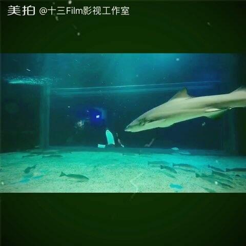 【十三Film影视工作室美拍】水下与鲨鱼共舞#美拍运动季##潜...