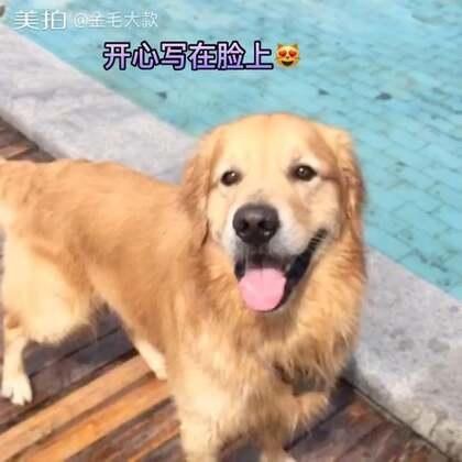 #宠物#阳光大男孩☀️http://c.b6wq.com/h.norUft?cv=a0XK0Yasz4S&sm=393c41