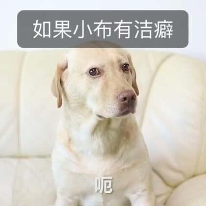#小布的日常生活# 记得定期给宠物体内驱虫哦!#宠物#