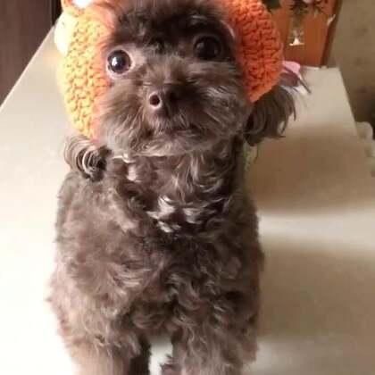 #宠物#百变可爱的小狐狸和小青蛙😜😜#我的宠物萌萌哒#