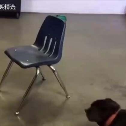开始以为这狗好傻。。。最后。。。