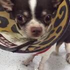 """狗狗感动的流下了眼泪,这是一只被救助的狗狗,我帮忙找到了领养,再说:""""走吧宝贝,去新家过幸福生活""""的时候,流下了感动的眼泪,人有情感动物亦是,所以请善待,不离不弃,对流浪动物也多一点关心。#狗狗感动流泪##热门##宠物救援#"""