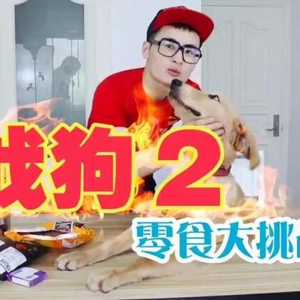 《战狗2》@super动次 本期节目零食感谢🌟火球买手🌟的赞助,动次真的爱的不得了!视频最后还有惊喜哦!(点赞转发评论抽出三个小伙伴送出零食大礼包啊)#热门##搞笑##宠物#