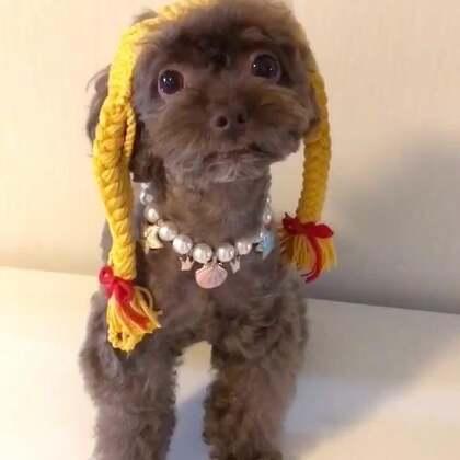 #宠物#梳着小辫的小可爱😜😜#我的宠物萌萌哒#