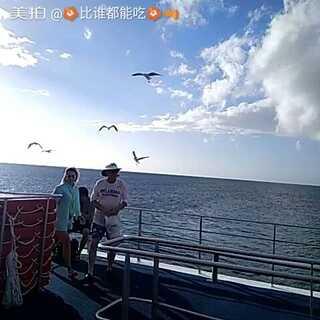 绿岛上的海鸥😂#澳大利亚大堡礁##特儿爱玩儿#