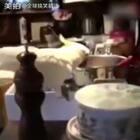 半夜起来看到鹦鹉在厨房偷面条吃, 没想到它只是个从犯! 主谋竟是…#全球搞笑精选#