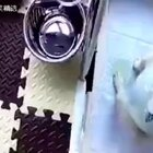 网友发现自家的狗狗好很久没大便了,于是乎放了个摄像头。。。。