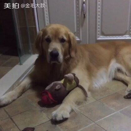 #宠物#汪不开森☺http://c.b6wq.com/h.norUft?cv=a0XK0Yasz4S&sm=393c41