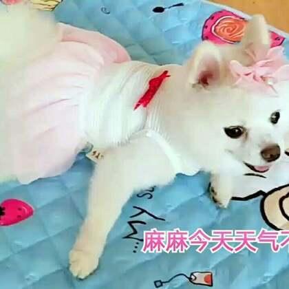 #宠物#打扮美美滴 准备上街咯😜😜#我的宠物萌萌哒##宠物装扮大赛#