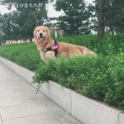 #宠物#来!分享一个治愈系的微笑🐶http://c.b6wq.com/h.norUft?cv=a0XK0Yasz4S&sm=393c41