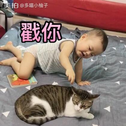 柚子真的好像比较喜欢妹妹,很爱戳他#宝宝##喵星人##多喵和小柚子的日常生活#