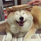 笑起来的样子好可爱啊!😍