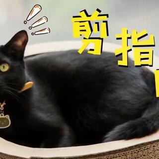 timo:不就是乖乖剪指甲吗,有什么难的!#宠物##我们养猫吧##白眼先生#(✨关注并转赞评本条,下周抽两位送出猫咪钥匙圈挂件哦✨)
