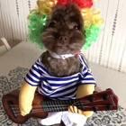 #宠物#今天是周末吉他手逗宝为大家高歌一曲😜祝大家周末快乐🌹🌹#我的宠物小精灵#