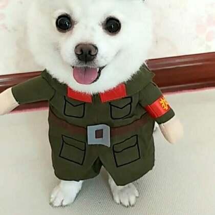 #宠物#偶是一个兵,来自老百姓,爱国爱人民,嘿嘿嘿😜#我的宠物萌萌哒##宠物装扮大赛#