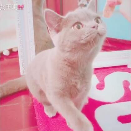 #宠物#这次nono看个够👀🙈逗逗小no子 超萌的😊格格吃饱了还想吃nono的😂格格真的是太馋了😅还在后面不停的抢镜😂可爱💓🙈