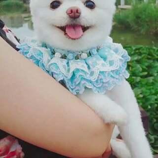 #宠物#姐姐的怀抱最温暖最有安全感❤❤❤#宠爱的抱抱##我的宠物萌萌哒#