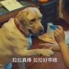 他的一生,被一只狗改变了!#二更视频##萌宠##我要上热门#