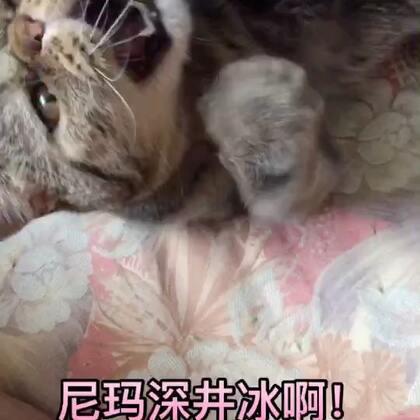 #加菲猫#包子超凶的🌝
