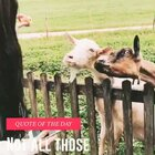 ‼️⁉️如此激动的羊!🐑hiahiahia太可爱了(穿了很厚的衣服🌚太冷惹)#宠物##带着美拍去旅游#