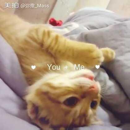 #喵星人#喵星人今天爪子被门夹了 好可怜 让它上床睡补偿一下#猫咪#