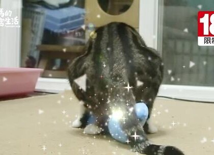 柚子:「好開心啊~」 嚕嚕:「好難過喔~」