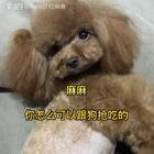 #汪星人##宠物#哈哈,不知道莎拉内心是怎么想我这个麻麻的😂😂!我家零食都是人吃的食材做的,干净卫生,只是给狗狗吃,没有任何添加剂,更健康!所以不关狗狗能吃,口味比较淡的家长也可以尝尝原味肉干的味道,哈哈,别有一番风味😏http://item.taobao.com/item.htm?id=557588985039