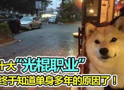 """130 十大""""光棍职业"""",终于知道单身多年的原因了!#单身职业##麻辣段子狗##搞笑#"""