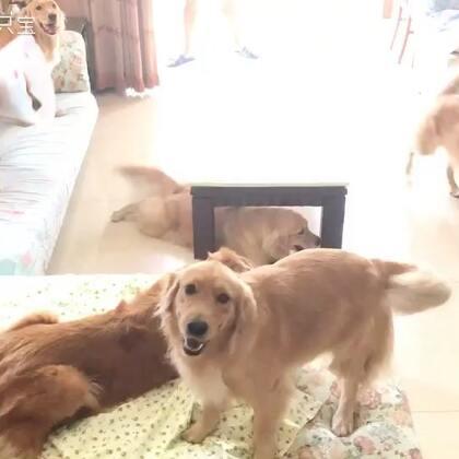 这个角度看它们,感觉好闹心😂😂#宠物#@宠物频道官方账号 @美拍小助手