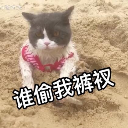 喵小汪海边🌊⛱配音版来喽😁有木有戳中你的笑点呢……留下你的小❤❤告诉我哦!😉😆#宠物##日志##宠物内心小剧场#