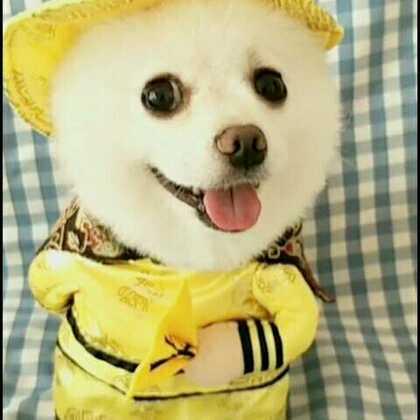 #宠物有戏大赛##宠物#祝波奇网生日快乐!🎂可爱滴小皇上来啦😜😜贵妃也闪亮出场咯😂😂#我的宠物萌萌哒#