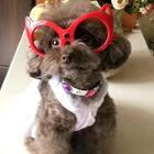 #宠物#波奇网九周年就要到啦👻逗宝祝波奇网九周年生日快乐🎂🎁🎊🎉#我的宠物萌萌哒#