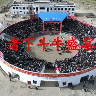 """#2017##斗牛盛宴#每年西藏的日喀则市白朗县者下乡都会举办藏乡斗牛节。参加比赛的耗牛披绸挂缎,以单挑的方式进行淘汰赛,最后的胜者称为本年度这个草原上的""""耗牛至尊""""。@德赛次平 @ANU-BaYa @巴得了 @CrazyYak💯 @光哥゛ @歌手·次仁央宗 @MrJin洛桑晋美 @强布斯 @圣地~艺人云丹"""