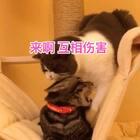 来来来 弟弟 你的jiojio给我闻一下 乖 别躲 别打啊 哎呦我去 我这暴脾气 jiojio没闻到 还被打脸 我嗷死你🙃🙃🙃#宠物##俩喵欢乐多##宠物有戏大赛#