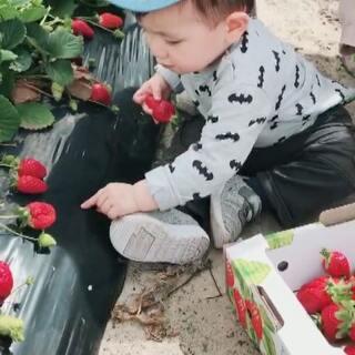 #宝宝#周末带着小宝到草莓园采草莓🍓小人儿走得累了,就索性原地坐下休息休息😊#混血宝宝##萌宝宝#@RobContarino
