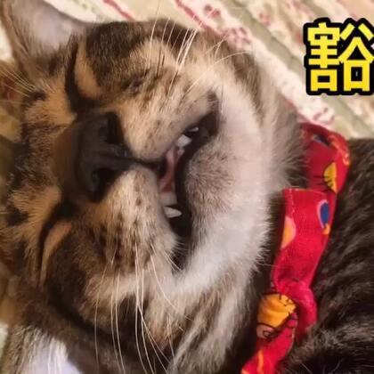 弟弟的逗逼睡姿合集😍哪一款萌到你😬留言告诉我😏下次拍阿妹 如何#宠物##捂脸杀##家有宠物爱翻白眼#