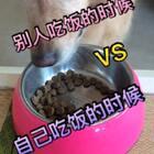 #别人吃东西vs我吃东西#看胖纸吃饭的时候,我一度以为家里进强盗了😳😳#宠物##金毛#@美拍小助手 @宠物频道官方账号