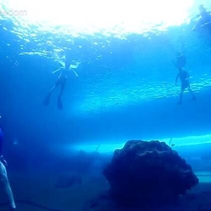 达达美人鱼是我见过最美的人鱼!Six feet under the water only Dada you are the most beautiful!#自由潜##U乐国际娱乐##美人鱼#