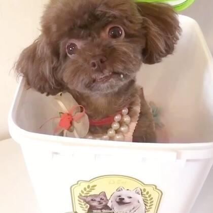 #宠物#小馋猫逗宝坐在储粮桶里等着好吃哒😜😜#我的宠物小精灵#
