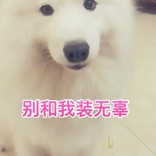 我也很无奈!#宠物##汪星人##热门#
