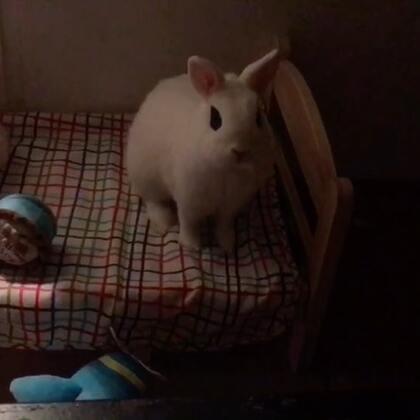 小床上放几个玩具就开心了😂 看白夜追凶的时候 有他粘着我 看着也不害怕了😘😁@宠物频道官方账号 @美拍小助手 #萌宠##宠物##海外生活#