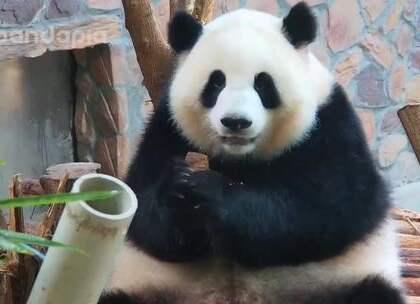 #萌团子陪你过周末#囡囡是怎么长胖的?