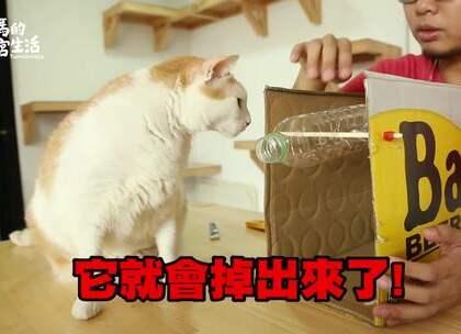 【手作益智喵玩具】_阿瑪:「什麼益智玩具⋯朕不需要!」