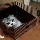 盒子喵,家里的盒子都留给你😌#手工##废物利用#