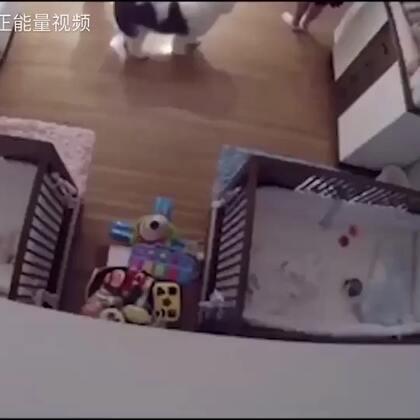 家庭监控拍到的一幕,哥哥在紧急关头接住了从床上掉下来的弟弟,做父母的要多加注意,为小哥哥点赞❤️