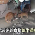流浪猫从来不吃别人喂的食物,只是默默叼走,这是一个妈妈的秘密 #宠物##感动#