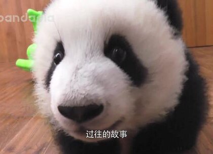 #大话熊猫#那个昨日的忧郁少年。。。